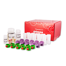 S-pluriBead® Maxi Reagent Kit